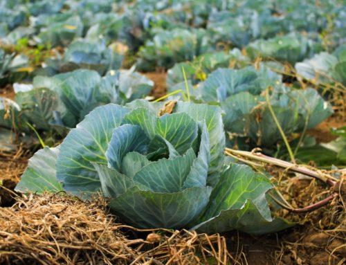 La lotta allo spreco alimentare