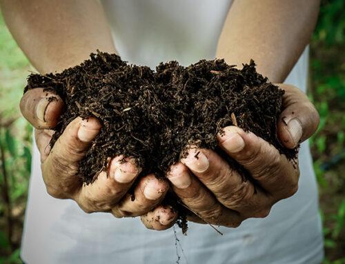 Il dissipatore alimentare e l'ambiente: una correlazione da toccare… con mano!